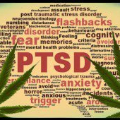 cannabis for ptsd
