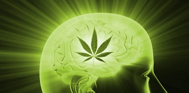 cannabis cures addiction to hard drugs