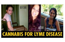 cannabis lyme shelley white